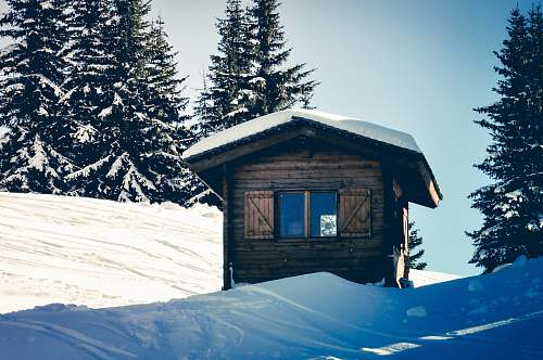 cabin brown wooden house beside trees during winter italy