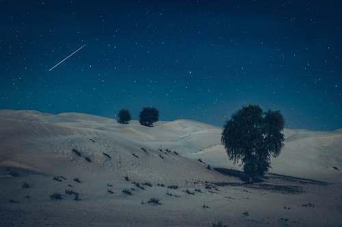 outdoors green tree on desert during nighttime night