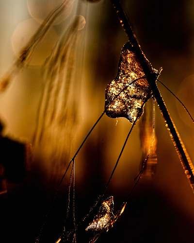 brown macro photography of web crystal