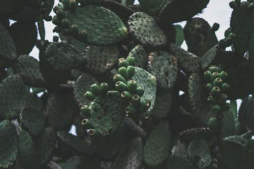human green cactus plant people