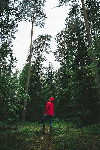 human man looking up surrounded by trees people