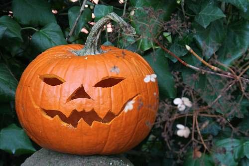 pumpkin  produce