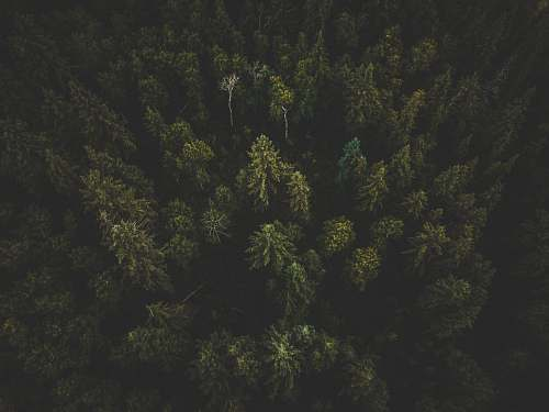 tree aerial photography of green trees abies