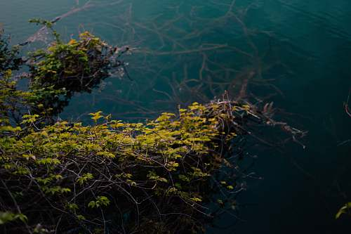 italy photo of green leafed tree on body of water algae