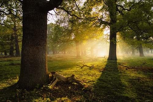 tree photo of trees sunlight
