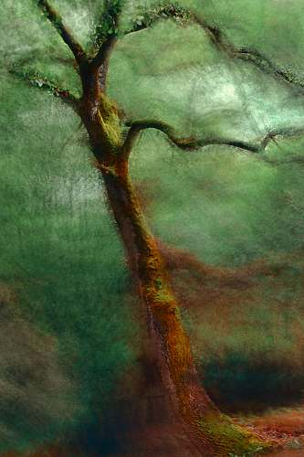 calm tree painting wall decor magical