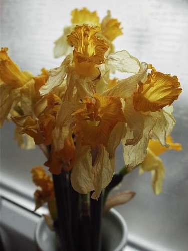 flower yellow flowers in vase blossom