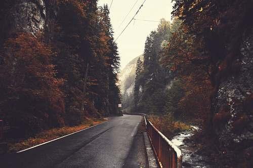 dâmbovicioara empty black concrete road top between trees under cloudy sky during daytime romania