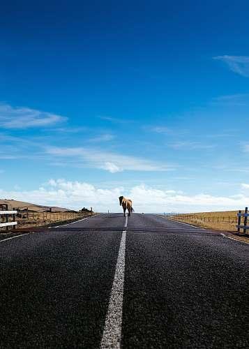horse horse walking on road tarmac