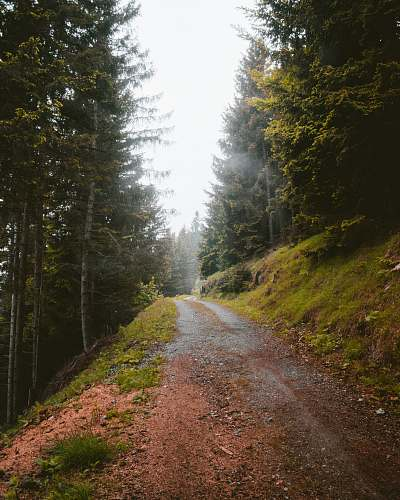dirt road road in forest gravel
