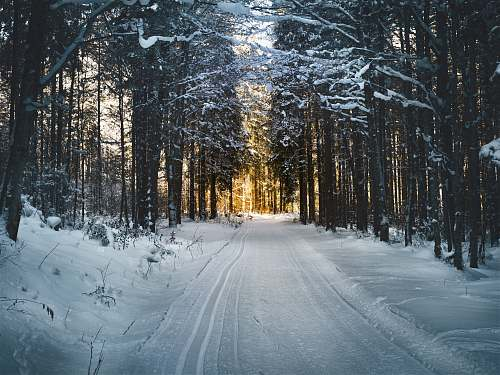 forest snow-covered trees and road during daytime tree
