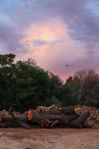 animal logs near trees bird