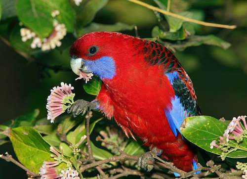 bird close-up photography of red bird perching on plant macaw