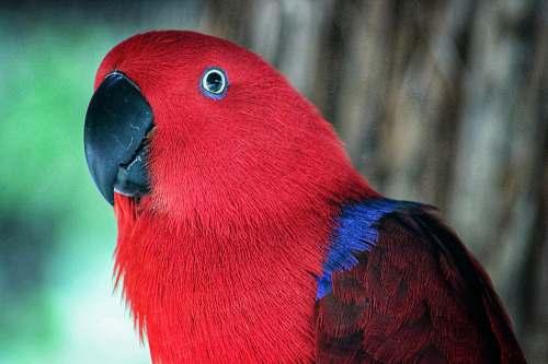 bird closeup photography of red bird macaw