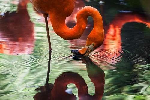bird pink flamingo flamingo