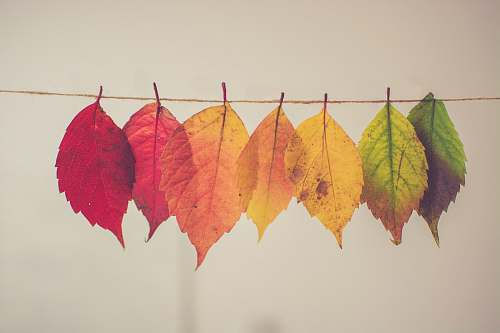 fall assorted-color lear hanging decor leaf