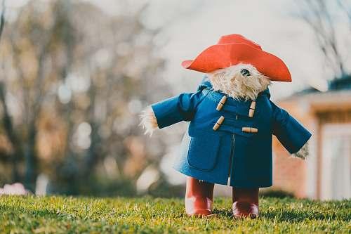 red bear wearing blue coat teddy