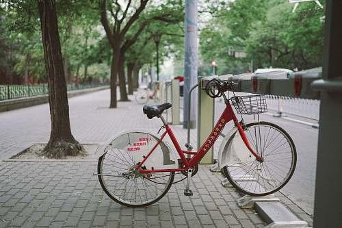 bike white and red bike parked beside tree beijing