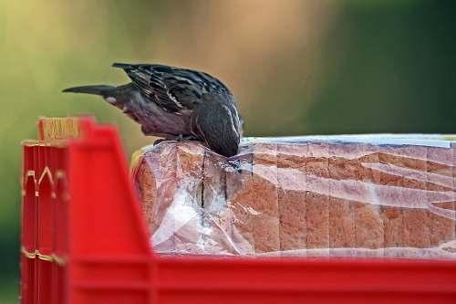 pigeon bird opening slice bread pack animal
