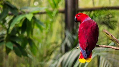 animal red bird perched on tree branch at daytime parrot
