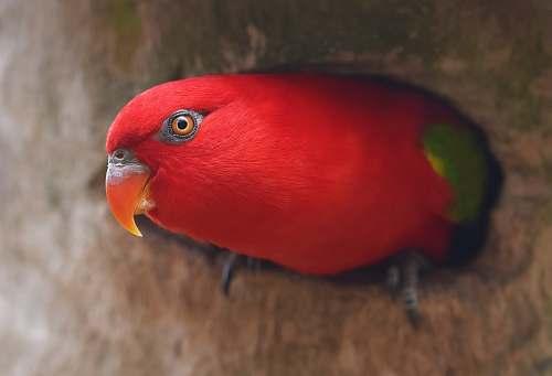beak selective focus photography of red bird animal