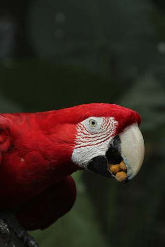 animal selective focus photography of red macaw macaw