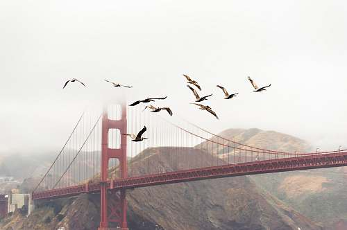 photo golden gate bridge bridge near mountain san francisco free for commercial use images