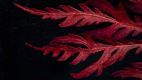 nature red leafed plant surface