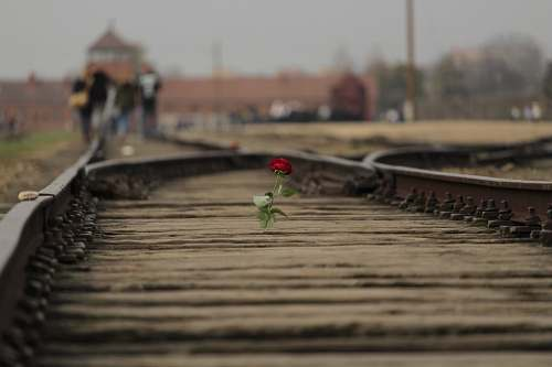 boardwalk red rose flower on brown train rail bridge