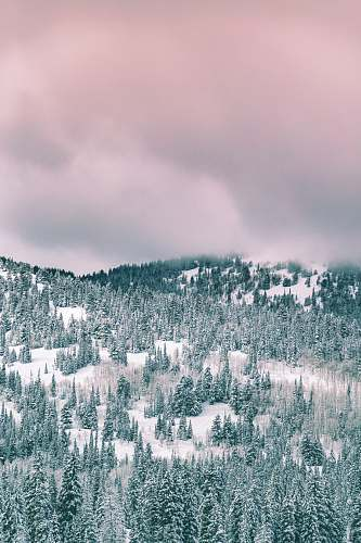winter green trees covered by snow under cloudy sky during daytime forest