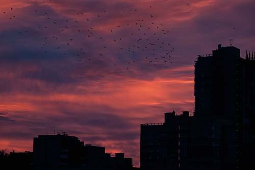 sunrise silhouette of buildings and birds sunset