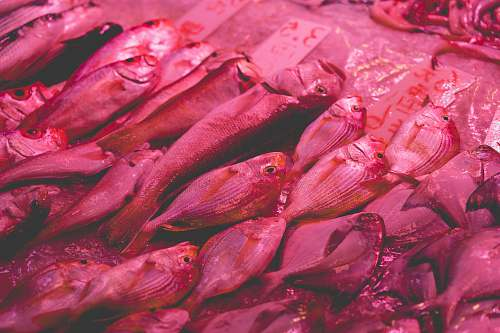 pink fishes on ice fish market