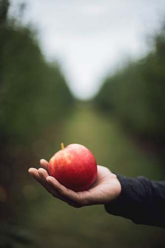 food apple on person's hand fruit