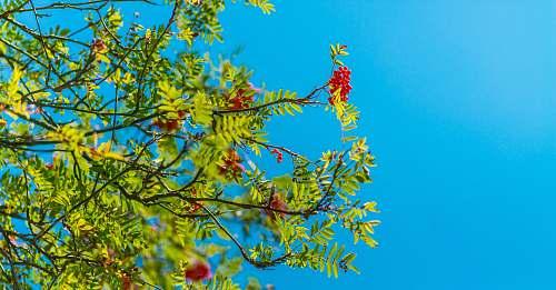 tree red flowers berries