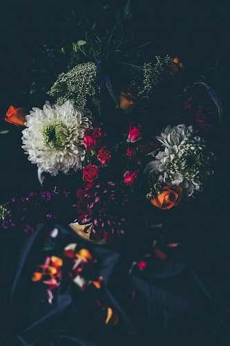 floral assorted-color petaled flowers dark