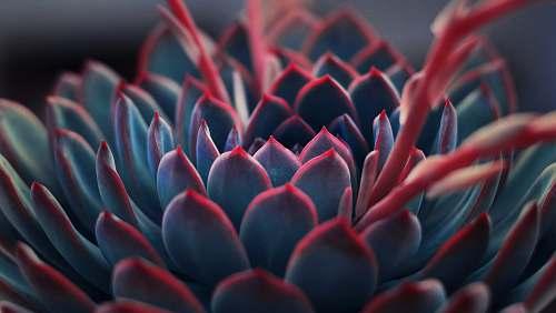 plant close up photography of succulent plant succulent