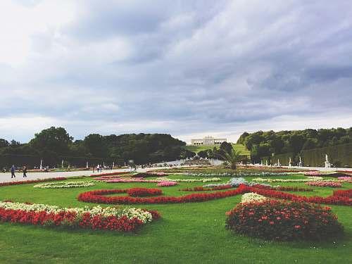 austria flowers on green grass field garden