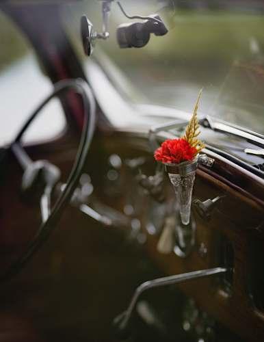 car focus photo of flower inside vehicle interior