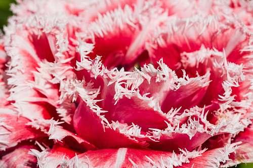 plant pink flower petal
