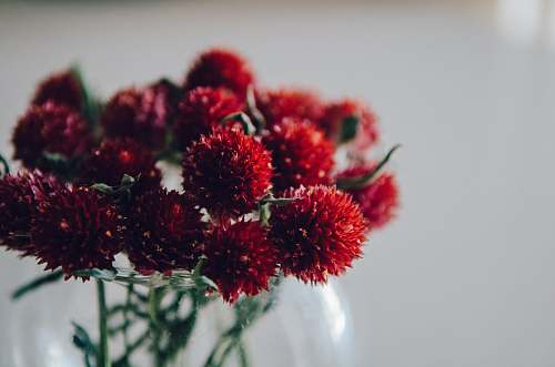 plant red-petaled flower in selective focus photography blossom