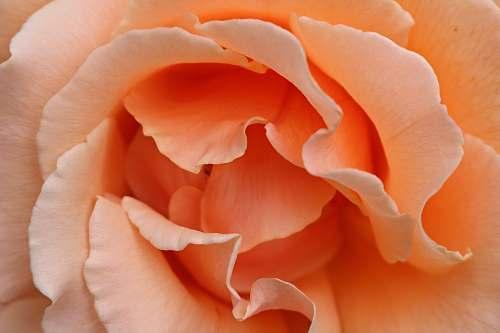 petal shallow focus photography of orange flower flora