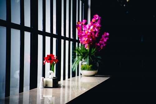 pottery two flowers on pots near window vase