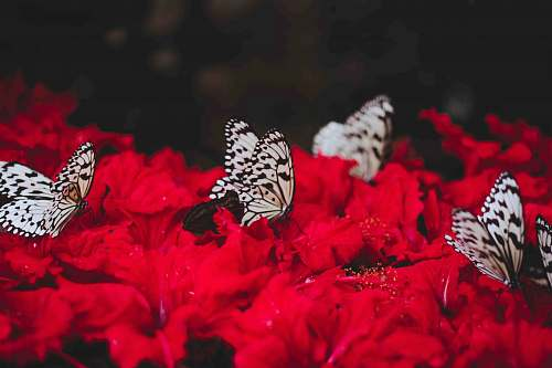 plant white butterflies standing of red flowers petal