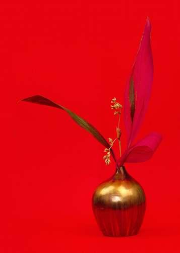 plant white flowers in gold vase vase