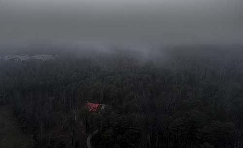 grey aerial photo of trees and house forest