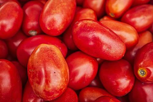 plant red tomato lot fruit