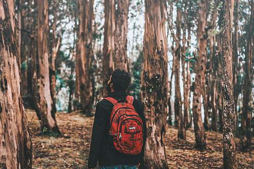 nature man looking on tree in forest ooty