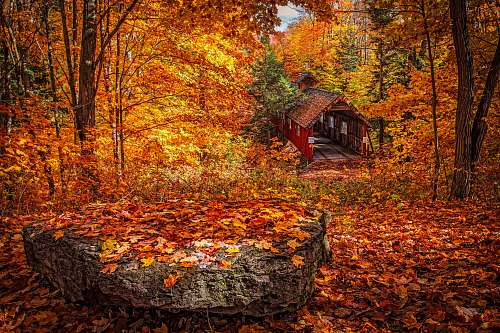 autumn wooden house in forest during day leaves
