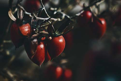 plant closeup photography of red fruit food