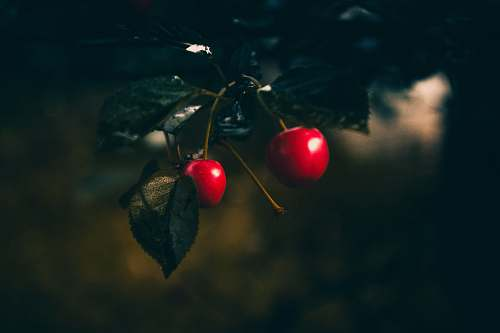 cherry shallow focus photography of berry produce